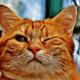 Amazon Mascotas, la nueva sección para animales domésticos