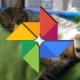 Google Fotos creará vídeos con las imágenes de tus mascotas