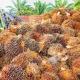 Aceitedepalma.org, la web para consultar sobre el aceite de palma