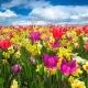 7 floristerías online