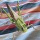 Cómo ver insectos en 3D con Google